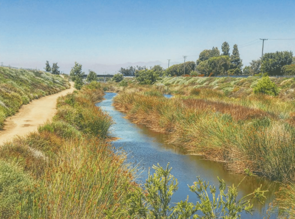 The Dominguez Gap Wetlands, hidden on the eastern edge of the LA River Bike Path, shoved between Wardlow on the south and Del Amo at the north. Photo by Brian Addison.
