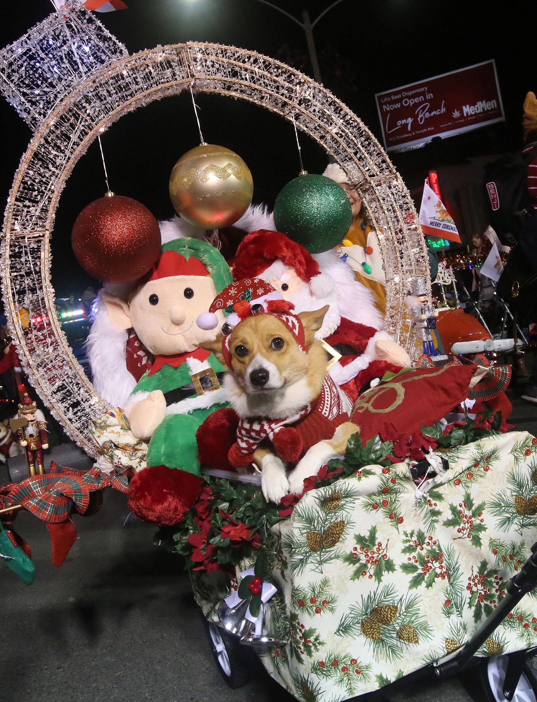 Belmont Shore Christmas Parade 2020 The Belmont Shore Christmas Parade is the latest COVID