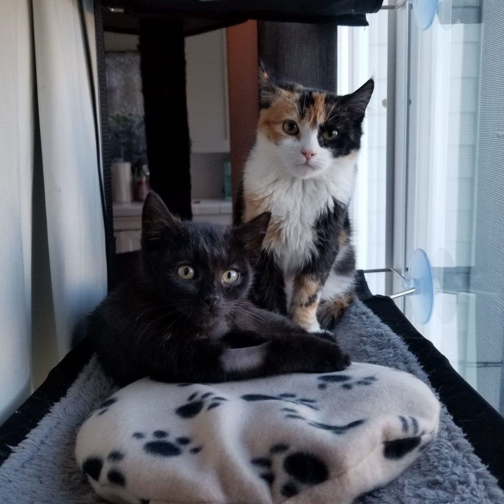 Tortie cat sits tall by a window in front of a cat bed.