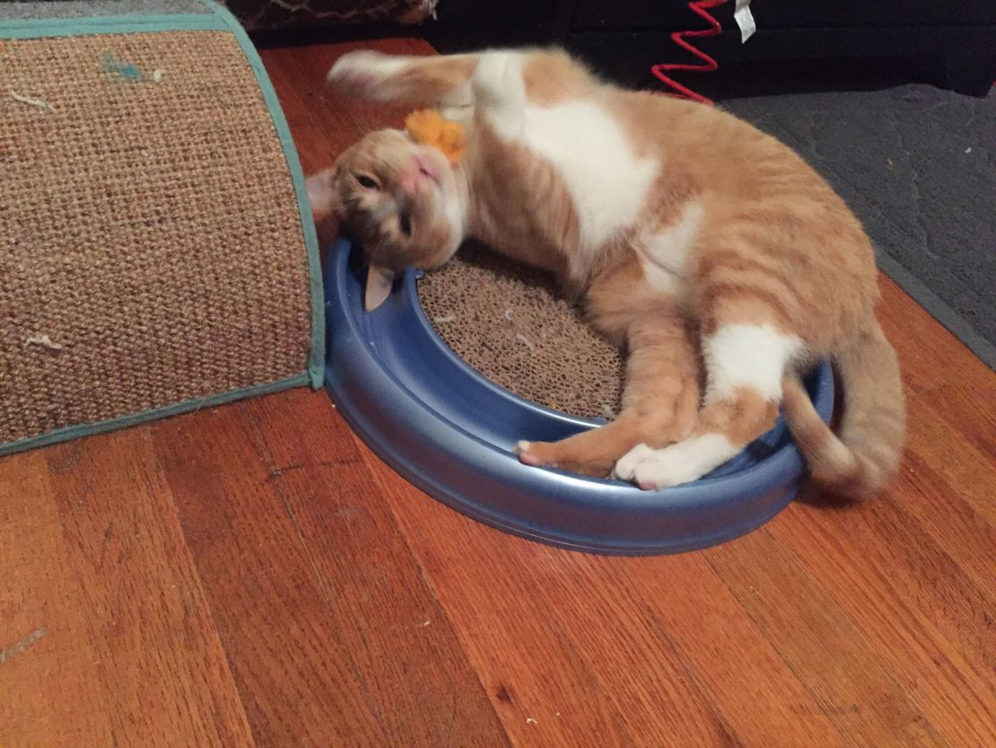 Orange cat with white belly lies comically on his back on a round cat toy with a tunnel-shape scratching post next to him.