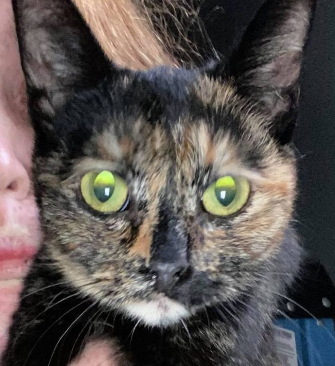 calico cat face with eerie green eyes, pupils dark on top and lighter on bottom.