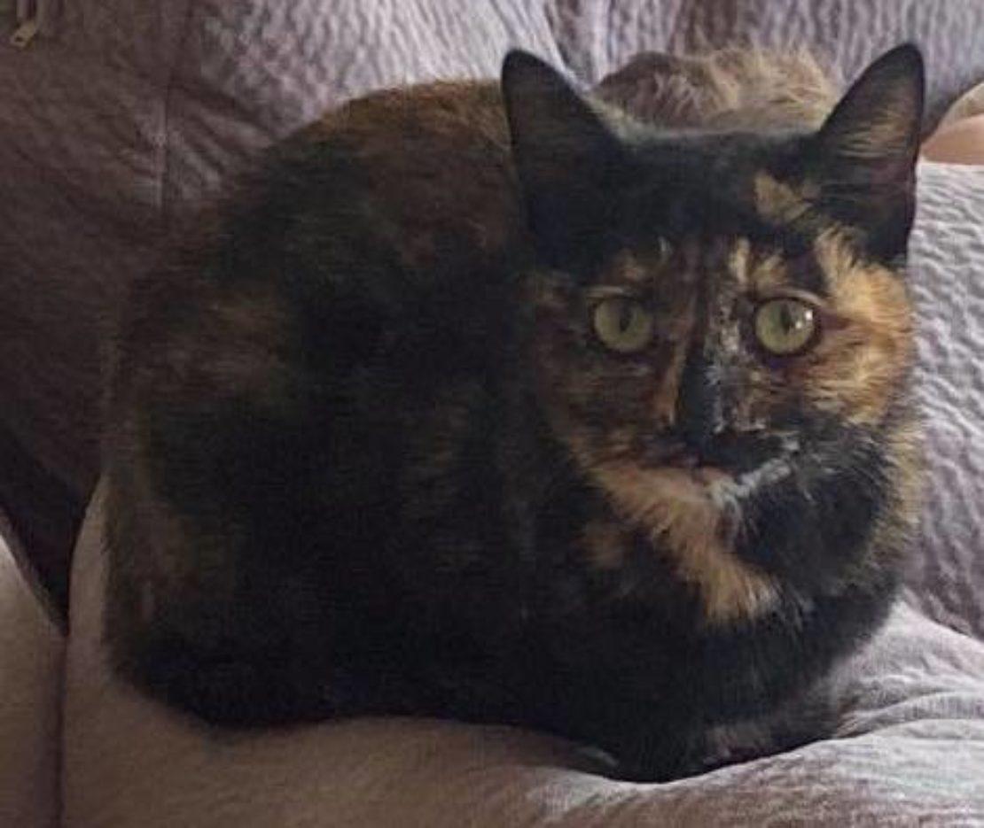 Pretty tortie cat meatloafing on a bedspread.