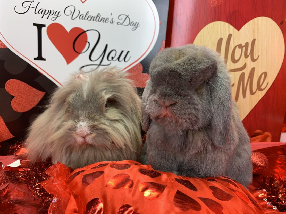 One tan rabbit and another gray rabbit sit on a red pillow with two Valentine's Day heart signs behind them.