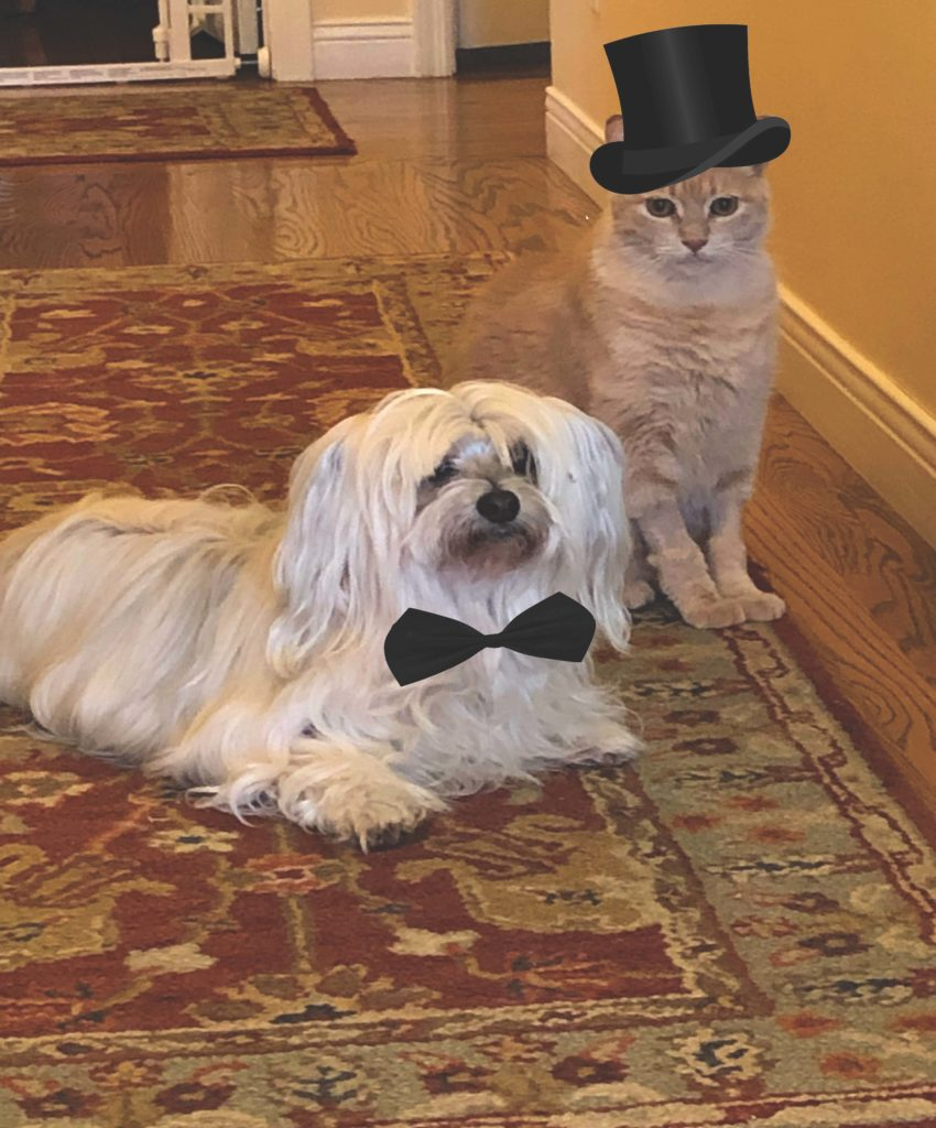 white fluffy dog in black bowtie sits on oriental rug. A light-orange cat in a black top hat sits tall next to him.