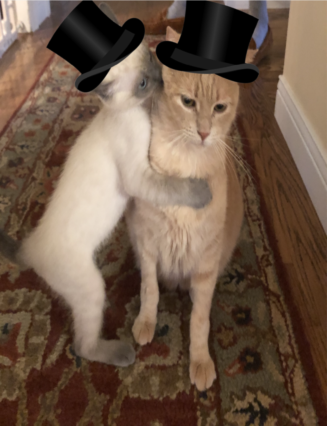 Siamese kitten in top hat hugs light-orange cat in top hat. Both sit on Oriental rug.