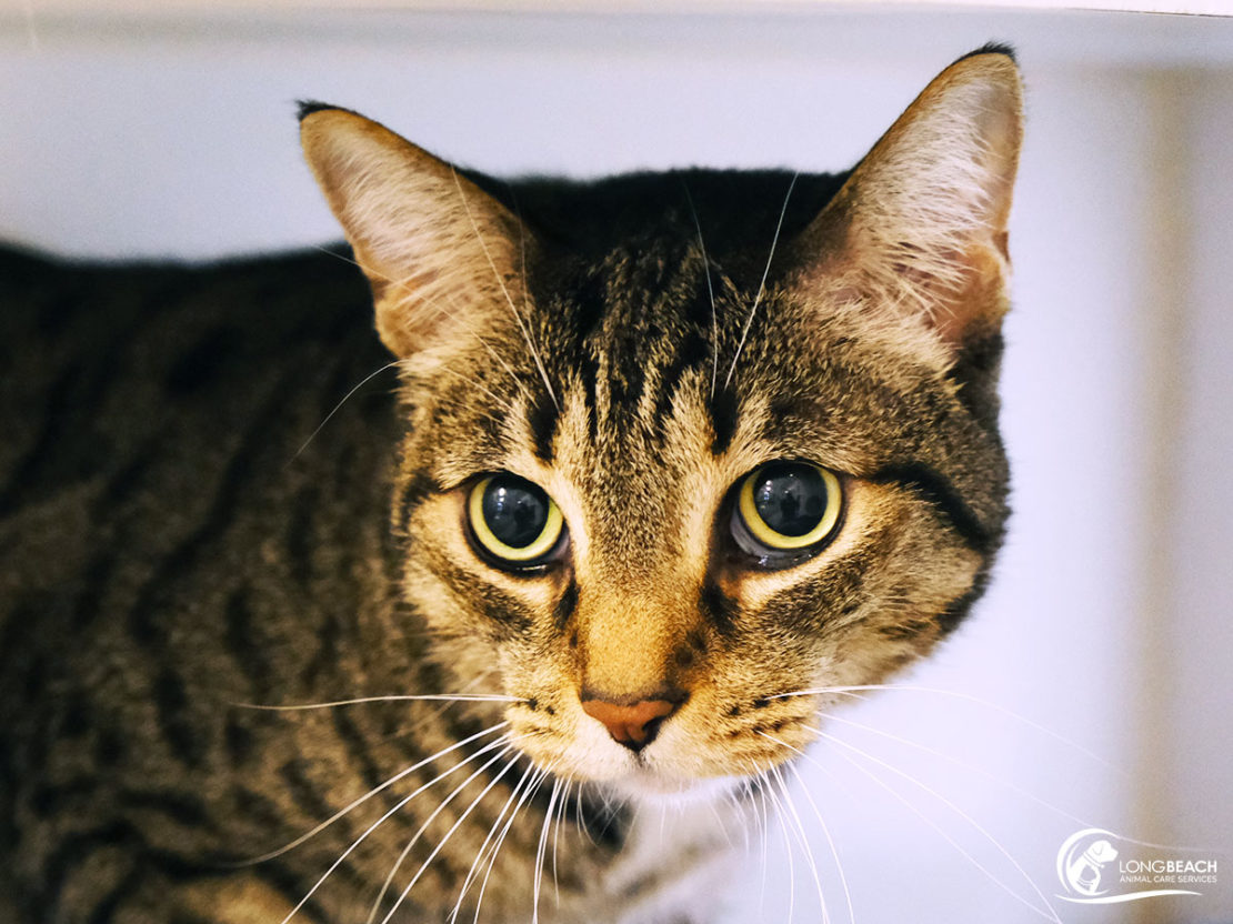 head and shoulders of brown tabby looking to the left