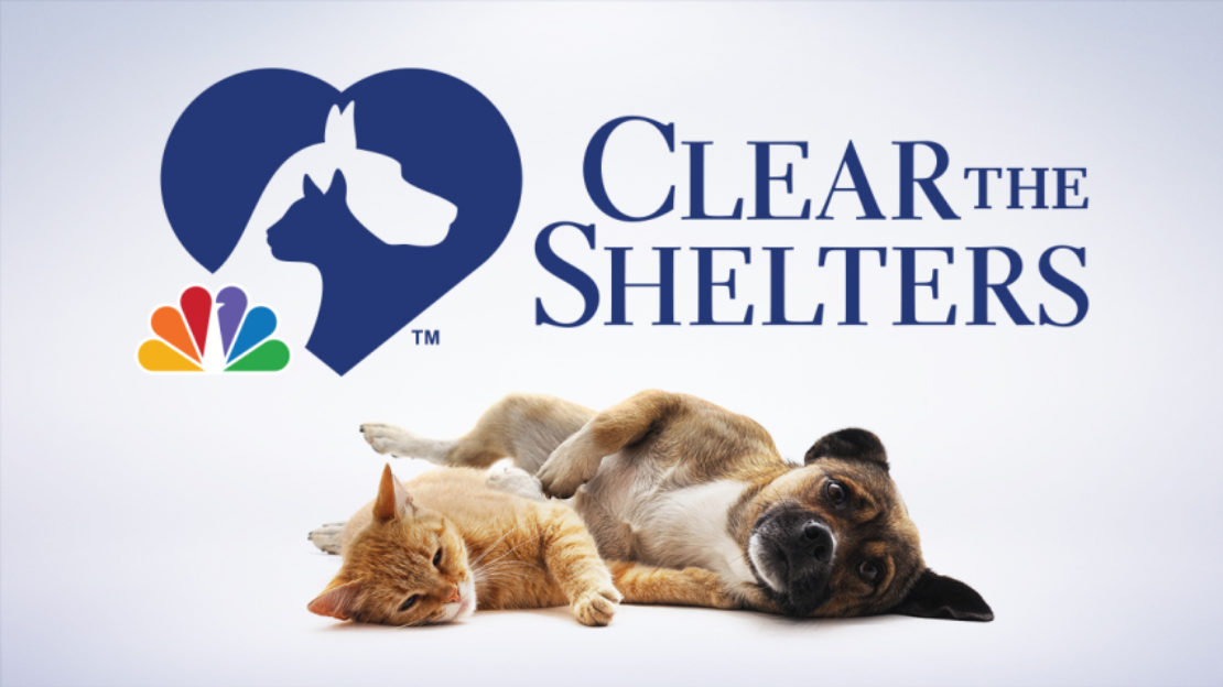Clear the Shelters ad, with an orange cat and a brown terrier mix lying side by side