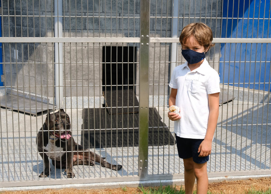 gray-and-white pit bull in a kennel, with young boy in a white shirt and black pants and mask standing in front.