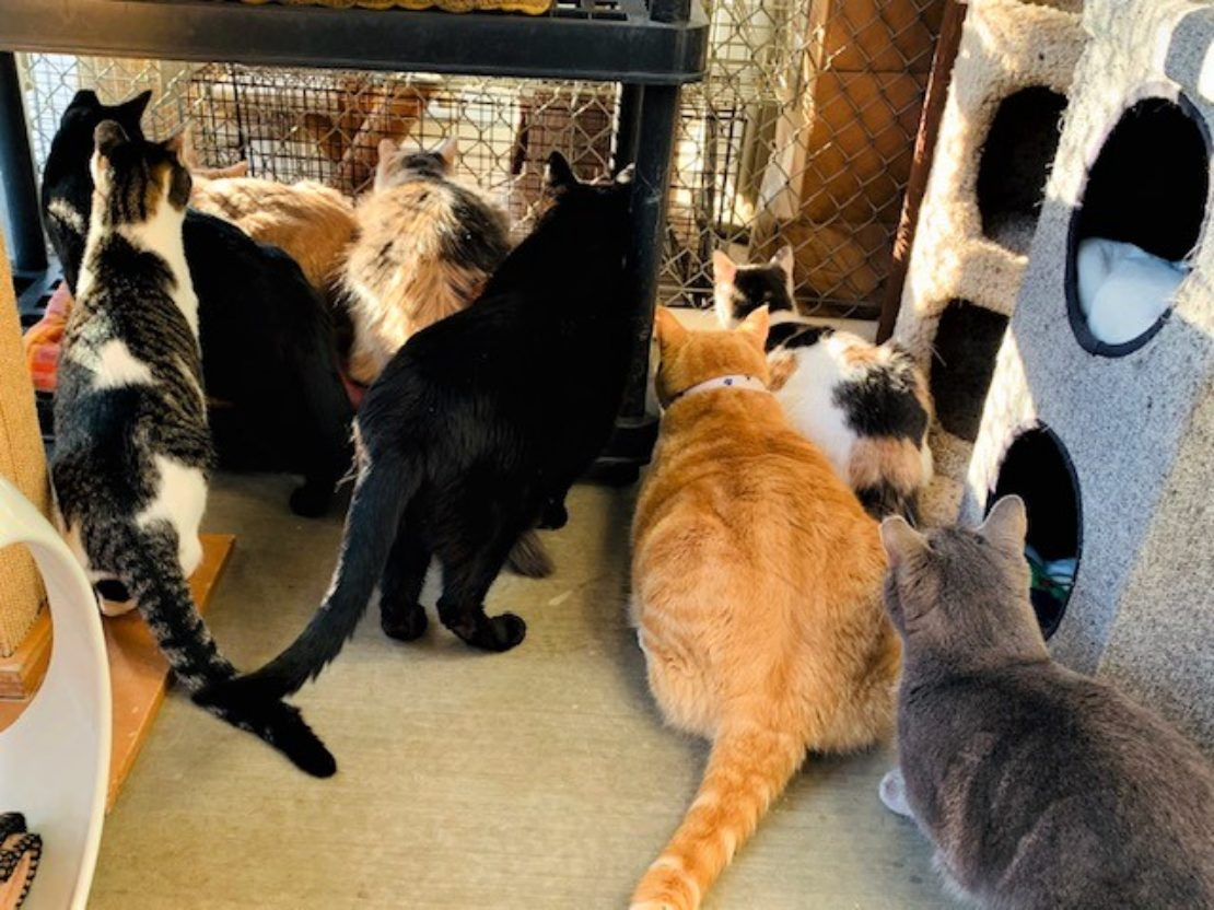 about eight cats of various colors and patterns stare into the outdoors