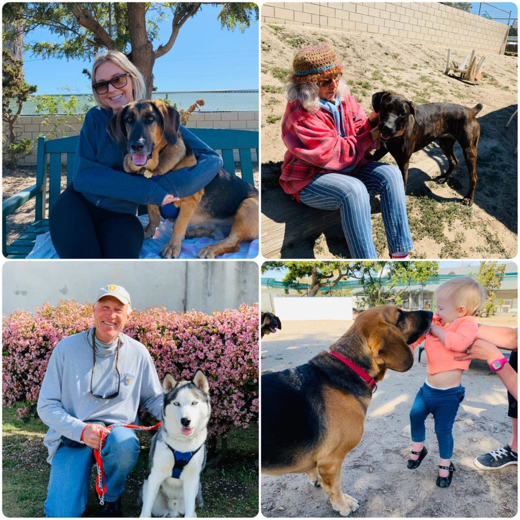 four photos of people with dogs in outdoor settings.