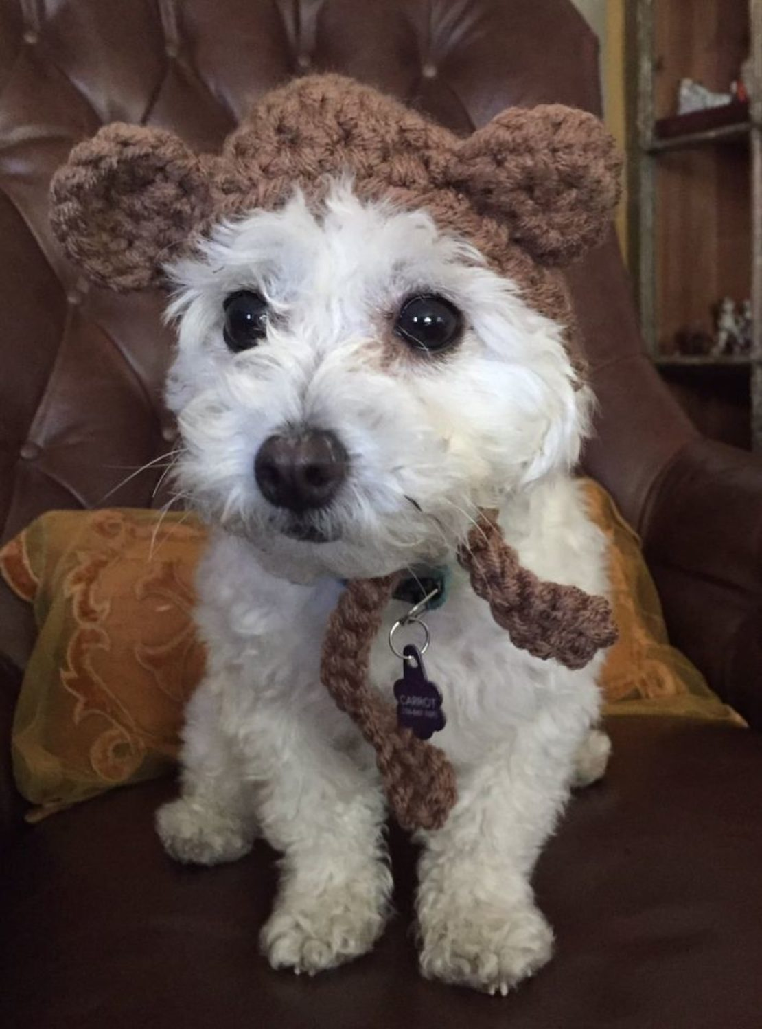 little, fluffy, white dog sits with a bewildered look on her face. She's wearning a knit hat with teddy-bear ears.