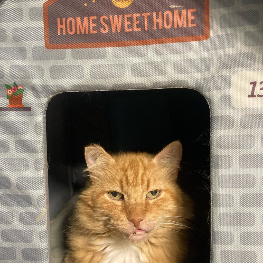 fluffy orange cat sits in a faux-brick house, in the doorway, with Home Sweet HOme above.