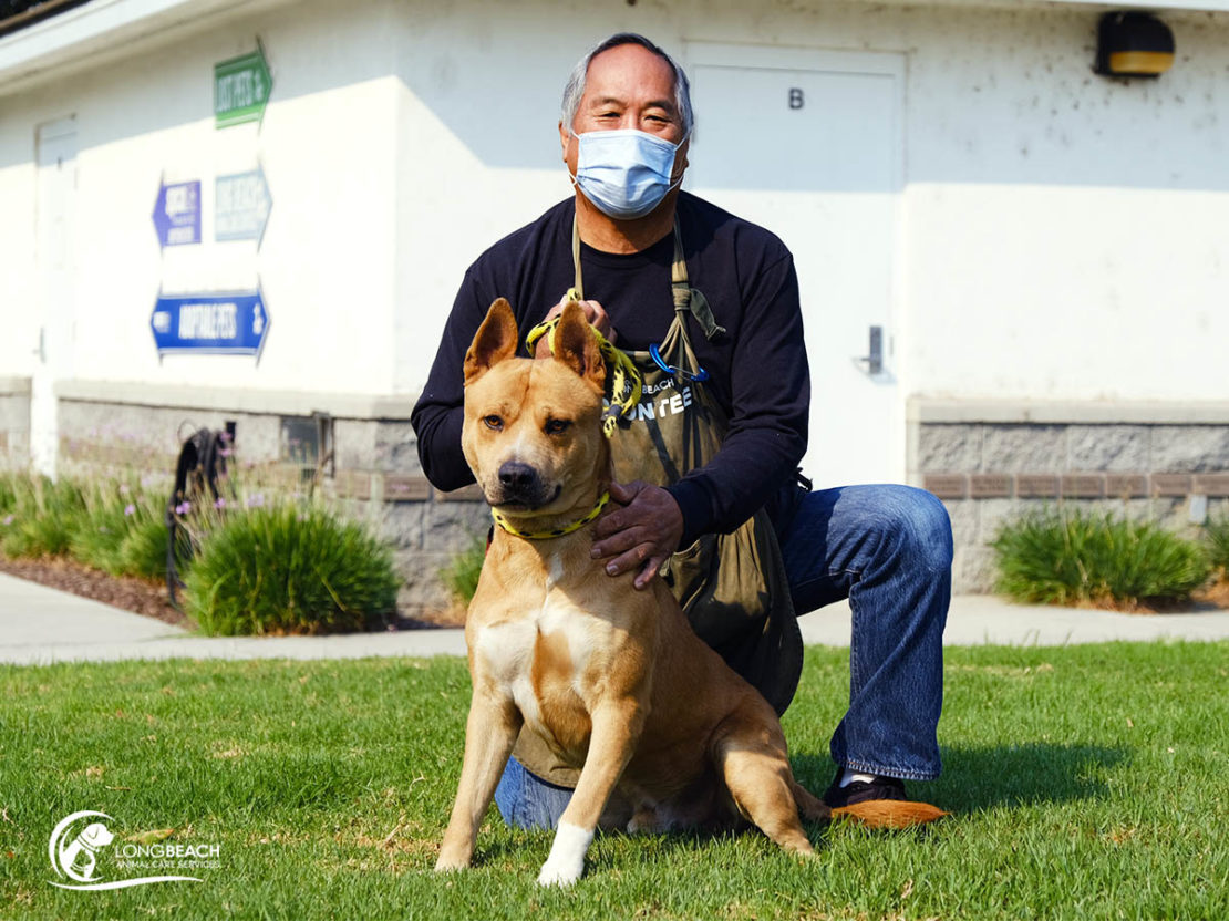 tan pit bull mix sits on grass with a kneeling man in a mask