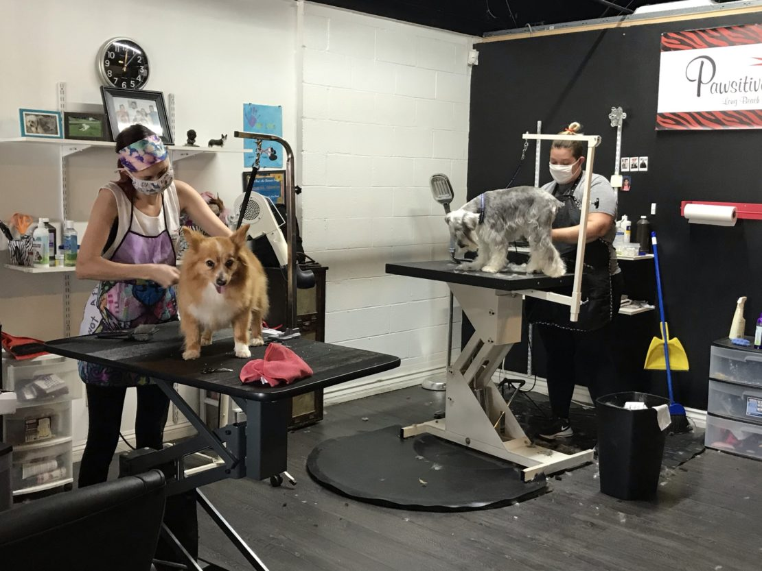 Two women groom dogs, one orange and fluffy, the other a gray schnauzer. They are both being groomed on tables in a large room.