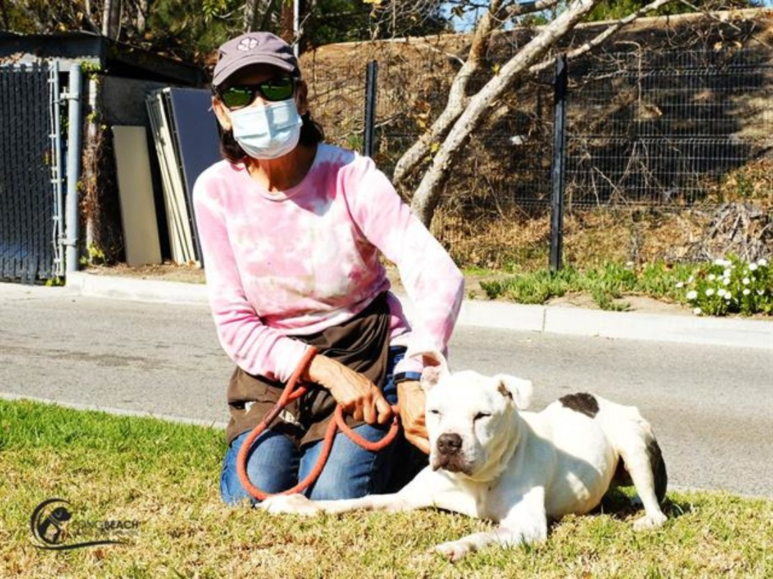 woman in pink shirt and mask kneels on the grass next to a white pit bull with black spot on back