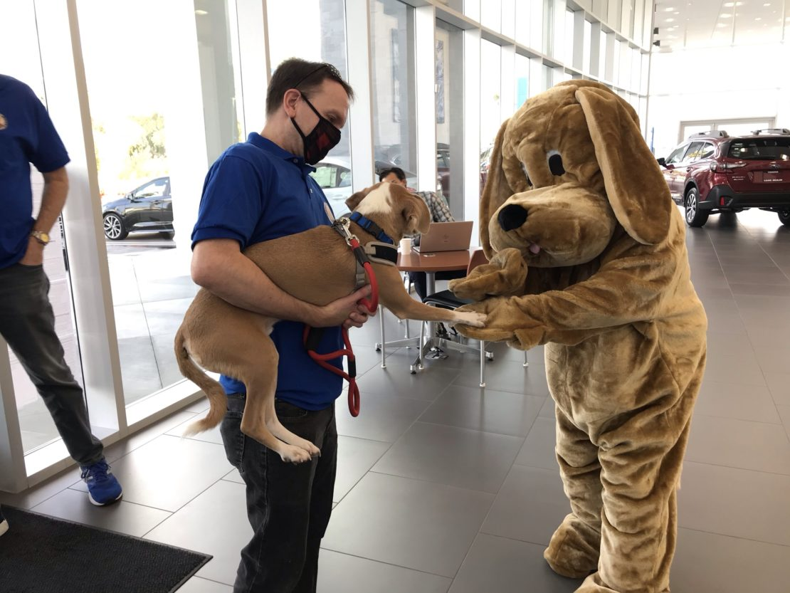 Man in black mask, blue shirt and tan pants holds small brown dog who's high-fiving a human in a dog suit.