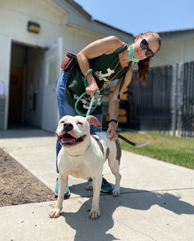 woman in green apron and sunglasses, mask on chin, pats white pit bull. she's standing on cement path between two grass patches. Building is on left.
