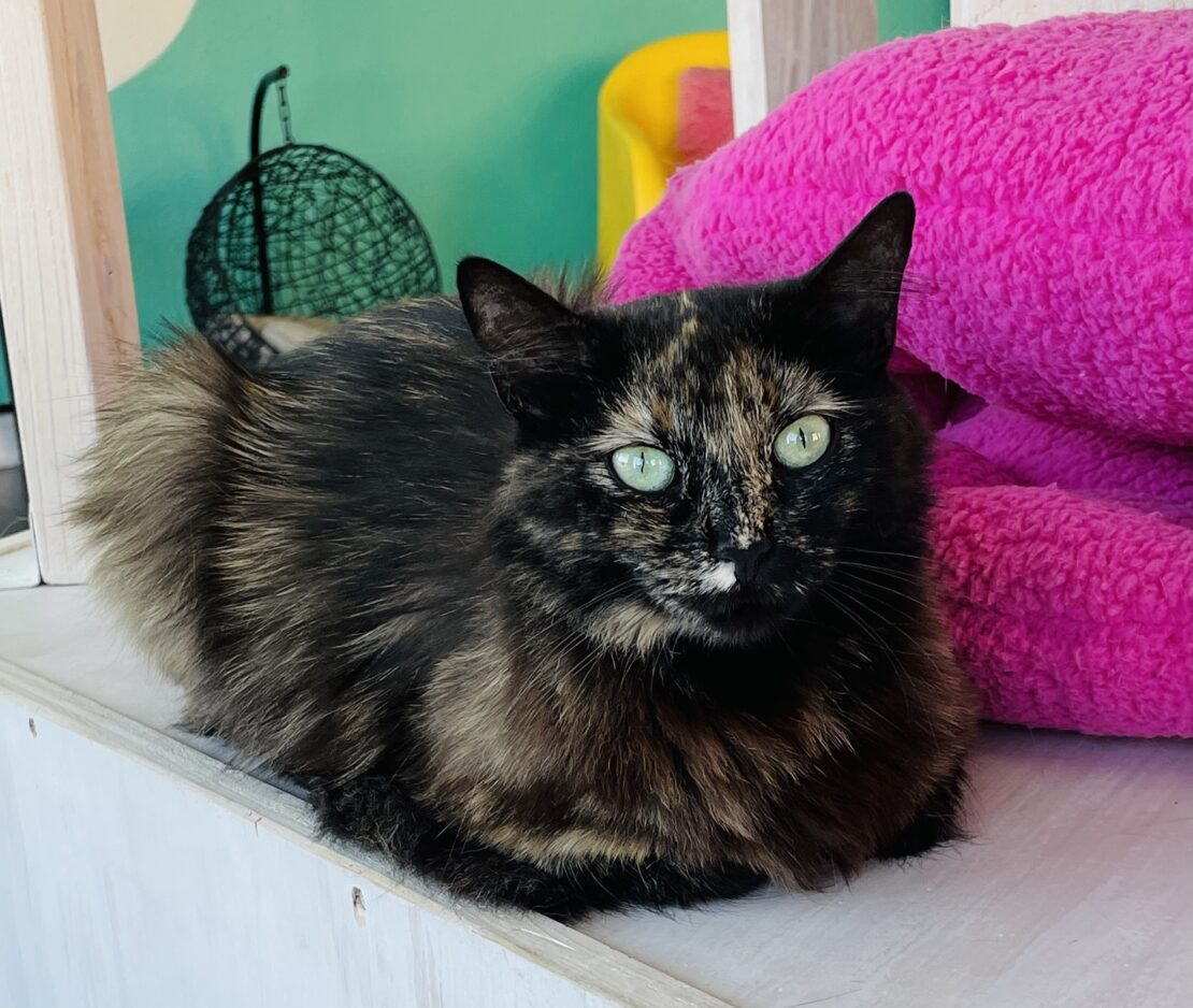 mediumhair tortie cat meatloafs on the floor, backed by a pink pillow