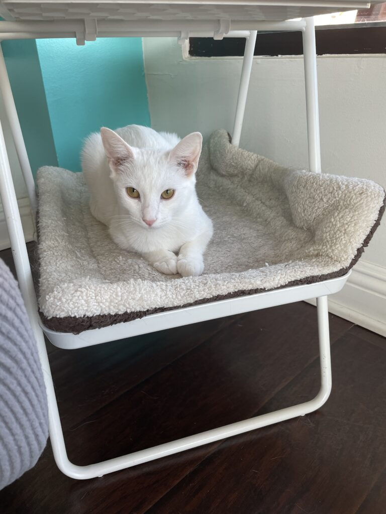 Small white cat lies on a white cat bed on a tall stand.